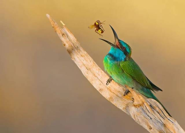 全世界最美的鸟类摄影作品,值得珍藏一生!