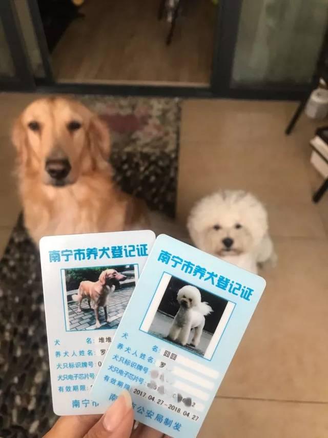 【收藏】南宁养犬登记办证全攻略!坐高铁情趣用品图片