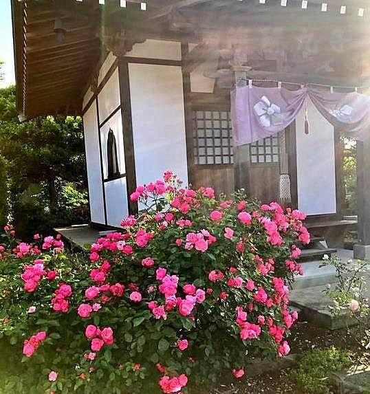 這個寺廟看起來和別的寺廟沒什么不同,看起來風景美麗,莊嚴又靜謐.