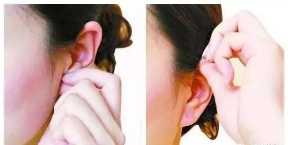 女人阴道被男入拇_提拉耳尖法:用双手拇,食指捏住耳朵上部,先揉捏此处,直至该处感到发热