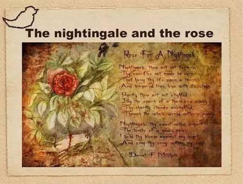 夜莺与玫瑰英文版_荐阅|林徽因译王尔德《夜莺与玫瑰》