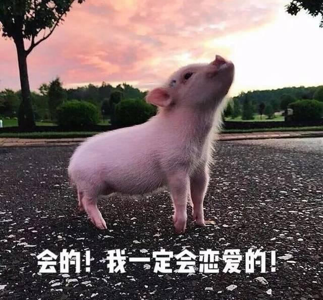 你是不是有别的狗了_表情包 | 你是不是外面有别的猪了