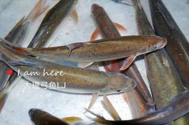 鱼的结构图名称及功能