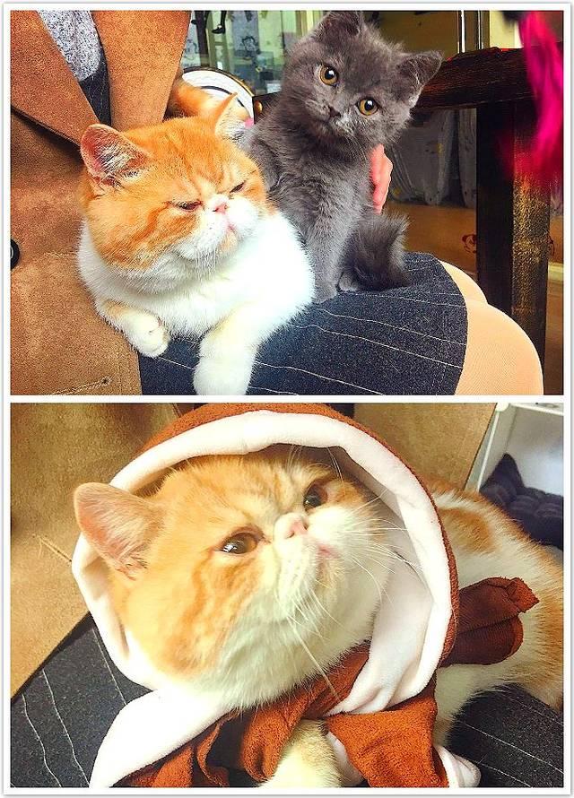 高清欧美撸撸图_【铜陵美食头条0124】天太冷,来这家咖啡店,喝喝咖啡,撸撸波斯猫!