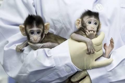 伦理睡觉_克隆猴来了,克隆人的最大障碍是伦理