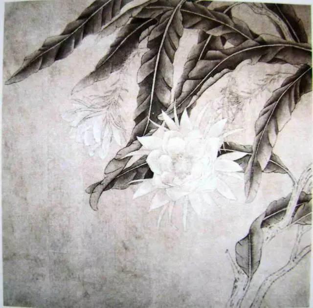 中国教程绘画花鸟芭蕉视频与工笔教程手绘昙花图纸图片