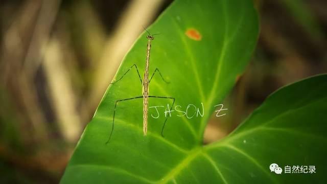亚马逊丛林,你的梦,我的梦(下)