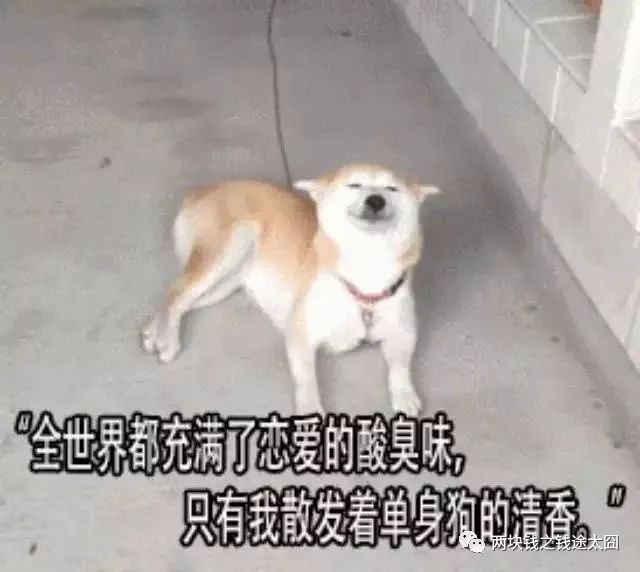我抬头一看满街都是单身的狗