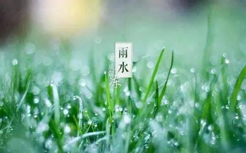 节气  雨水