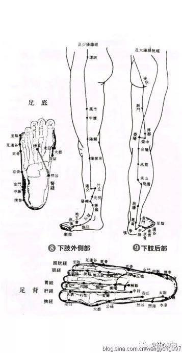 人体下体艺术_人体下肢内侧部 下肢前部下体穴位图