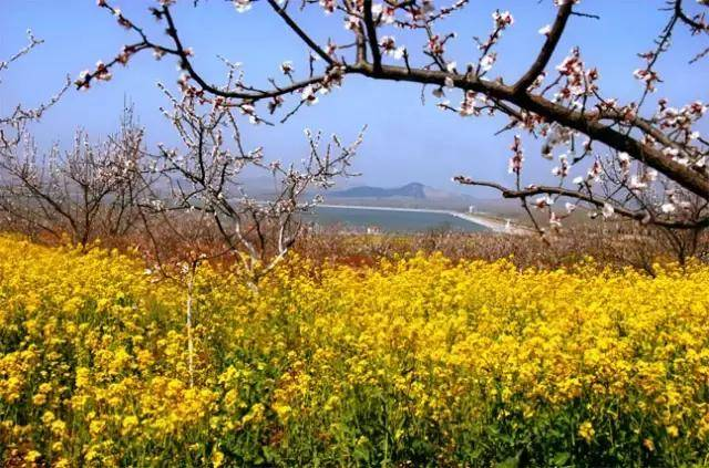 徐州春游好去处:放风筝,爬山,烧烤,赏花,想怎么嗨都行