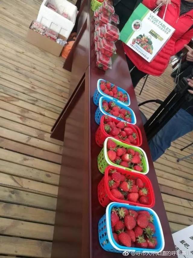 【约起】过个不一样的周末!①呼和浩特第二届草莓文化节开幕啦!吃草莓去~②饕餮福利 呼和浩特龙鱼论坛 呼和浩特龙鱼第9张