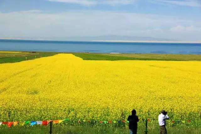春天在哪里呀,春天在哪里,春天在那油菜花的田野里