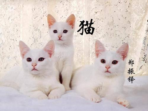 猫郑振铎教学设计教案汇总图片