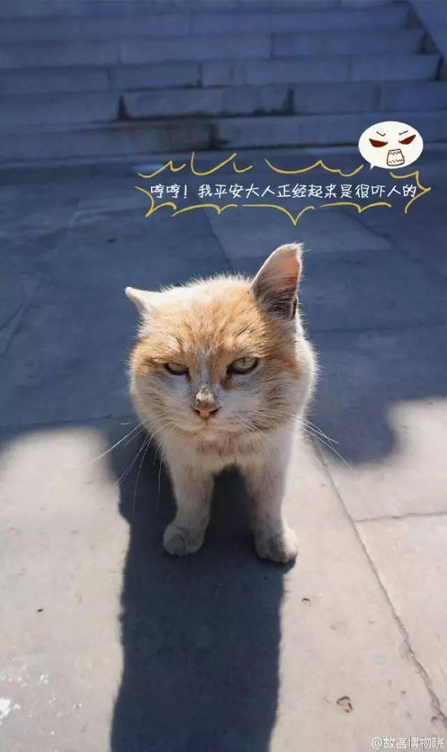 据我们深入调查,故宫的猫还真没有一个吃白食的,让人自愧不如啊