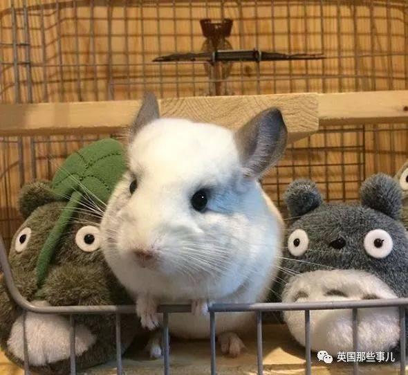 动物壁纸兔子590_542跳老虎的火圈中心概说图片