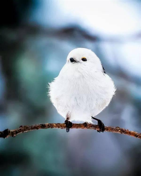 a模样的模样竟然真的存在!特大萌化了小鸟绿蝗虫图片