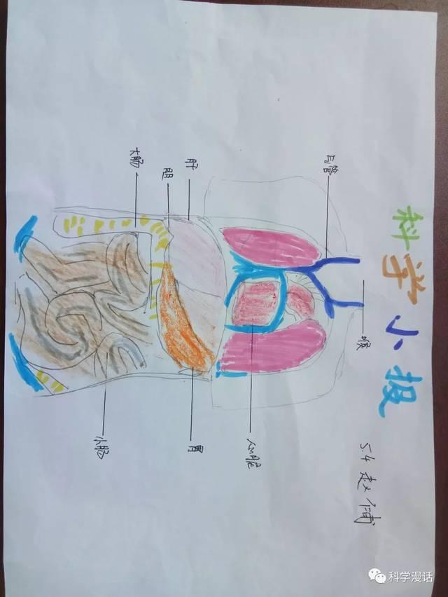 布置了一项选做作业--创办一期消化系统卫生保健手抄报,给孩子们一个