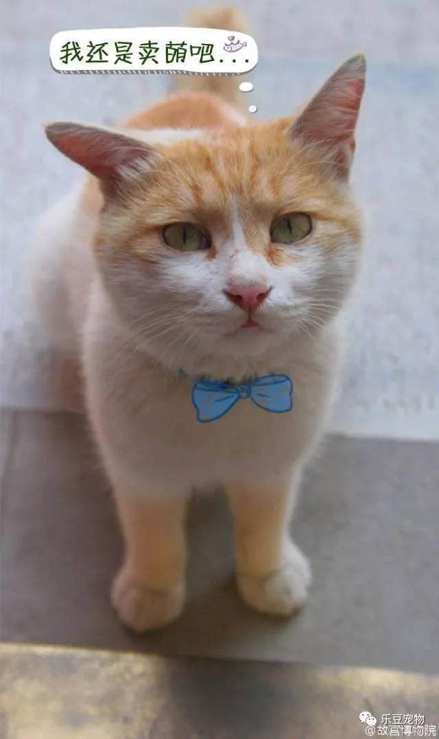 除了这只黄白猫,有另一只被称为
