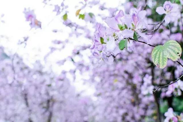吸入肺里的是湿润青草的芬芳, 在这万物复苏的季节里, 一切都显得