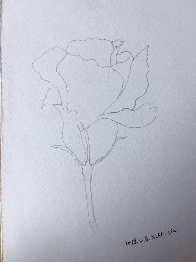 零基础学绘画-水彩《紫蓝色无名花》