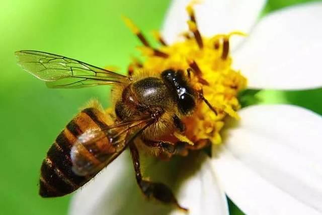 科尔蜜蜂从坦桑尼亚带着35只巴西蚂蚁蜂后,回到非洲进行研究育种.教授聚宝的鸡窝图片