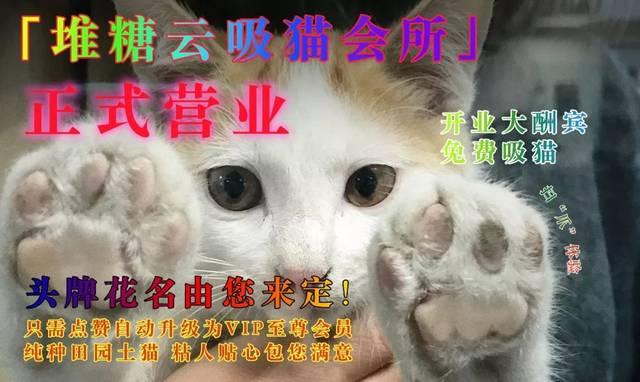 吸猫重度患者必入!不会画猫也可以做好看的撸猫手帐