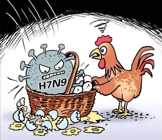 山西出现一起h7n9禽流感疫情,襄阳防控如何?图片