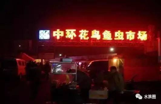 天津、北京、河北三地各大花鸟鱼虫市场全攻略后附全国
