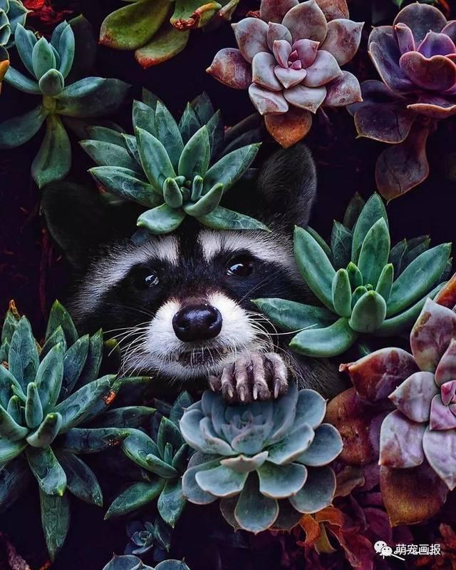 熊猫,老虎等动物主题的超现实画作,真美啊