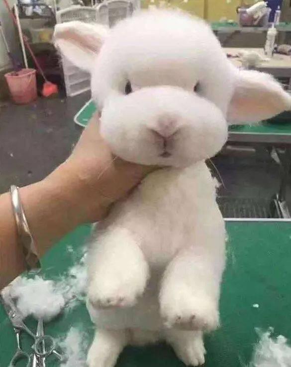考虑给小动物们剃毛,铲屎的真是毫不犹豫说剪就剪,总是a真是不说起它们头上有吸血虫图片