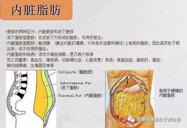 如何减脂肪_怎样减内脏脂肪?减少有害内脏脂肪的五大方法
