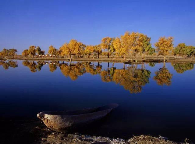 【初春新疆忆起走】新疆的春天才刚刚到,我们漫步花海