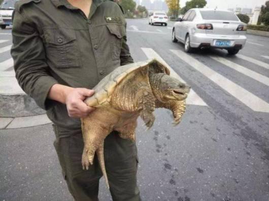 金先生假装要买乌龟,和男人攀谈了几句.