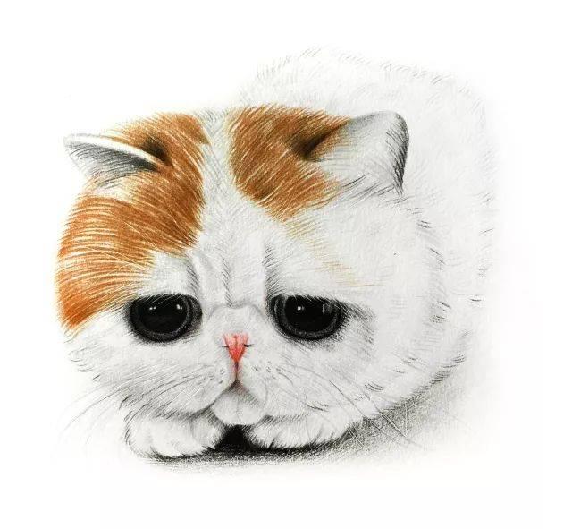 2,猫咪五官的绘制方式图片