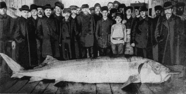 黑龙江是一条江吗,黑龙江打上一条1028斤大鱼是要成精吗?卖了22