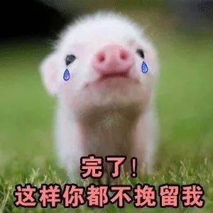 你是不是有别的狗了_你外面是不是有别的猪了?