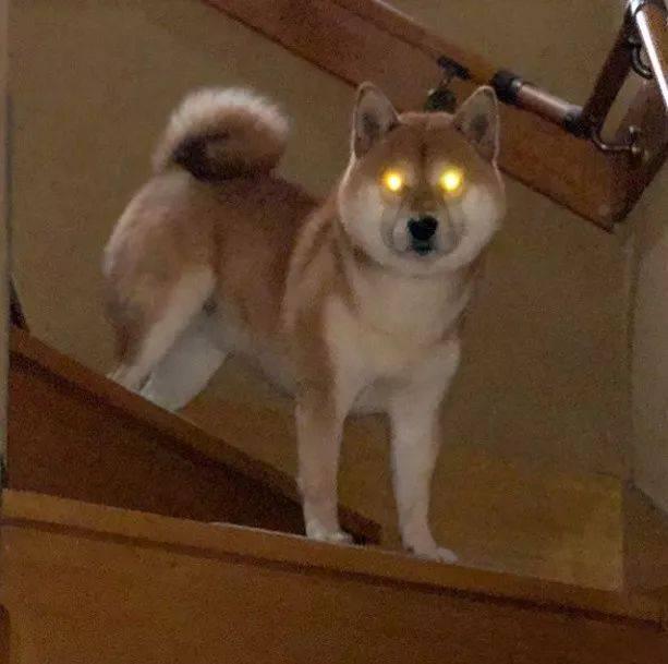 你是不是外面有狗了_看着我的钛合金狗眼回答我,你是不是外面有狗了,心里还有没有这个家