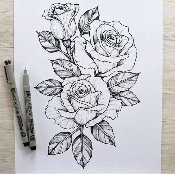简单易学的针管笔植物手绘,超适合初学者!-文化频道