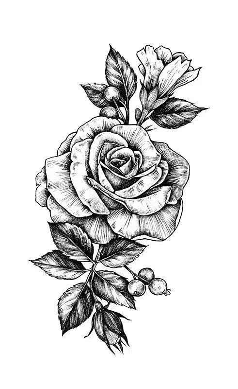 一片简单的花瓣→一束花→ 纯线描 → 上色  现在开始,拾起针管笔