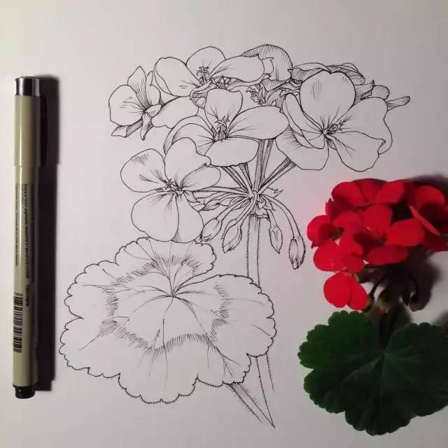 怎样手绘画一大束花