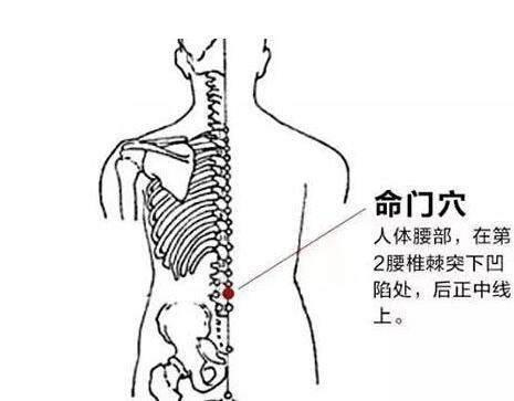 美女美穴人体摄影_命门穴,人体的长寿大穴,益肾,滋肾壮阳要穴,对肾虚导致的泌尿生殖