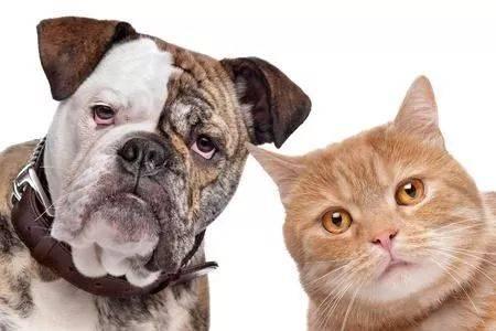 猫狗大战国�y�b9aj:f�_618|猫狗大战,混战之下什么值得买?