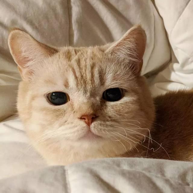 每次主人晒照都能吸引数万网友围观吸猫!