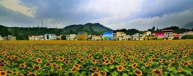 乡村旅游规划设计,农业旅游规划设计