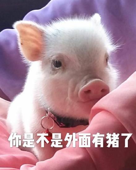 你是不是外面有狗了_你是不是外面有猪了