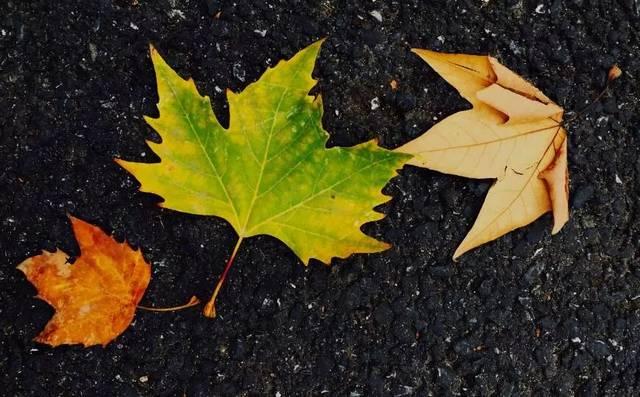 树叶的脱落图片