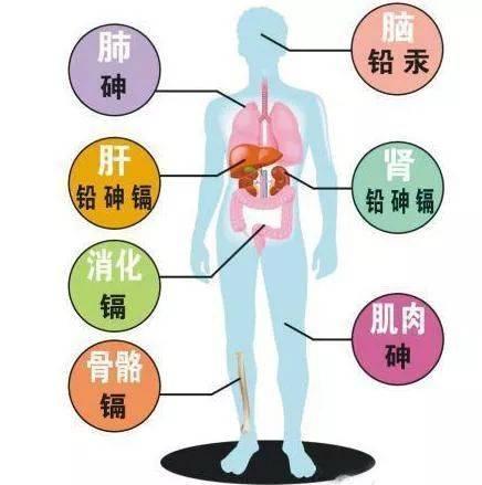 人体各脏器分布�_有的药膏里还含有重金属成分 久而久之伤害人体脏器技能,沉积毒素 对