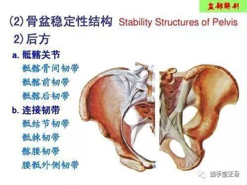 类似于人体艺术的_科普:人体运动的核心——骨盆