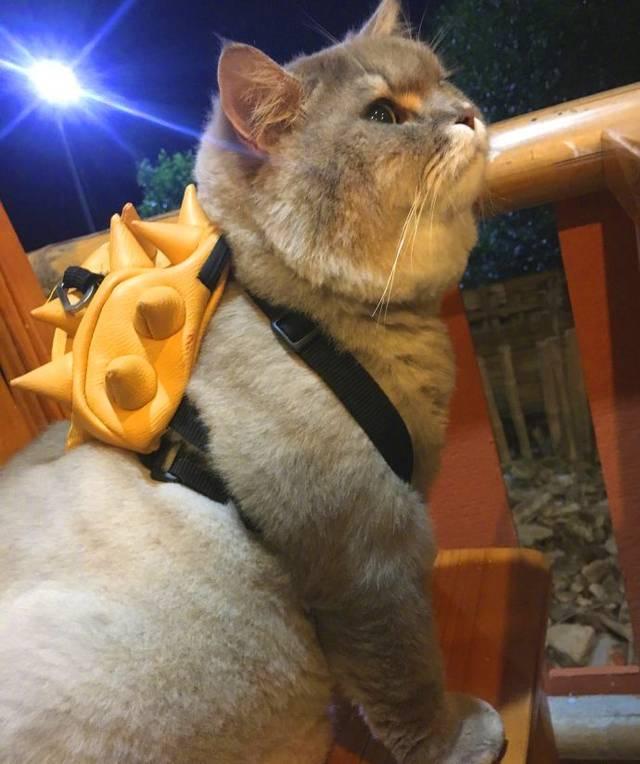 淫乱黄色小?:)?h?_大肥猫,一年四季出门都背着这个比他脸还小黄色的小包包,这五短身材也